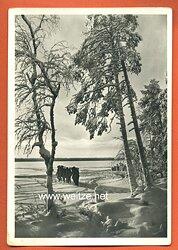 "Waffen-SS - Propaganda-Postkarte - "" Kampf der SS-Gebirgsdivision ' Nord ' in Karelien "" - Karelischer Winter"