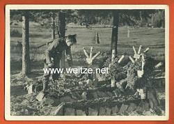 """Waffen-SS - Propaganda-Postkarte - """" Kampf der SS-Gebirgsdivision ' Nord ' in Karelien """" - Unvergessen"""