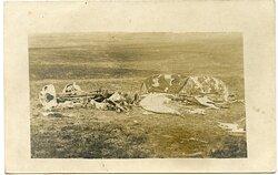 Foto Fliegerei 1.Weltkrieg: abgeschossenes Flugzeug