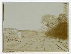 Foto Kolonie, Gemüseanbau in Deutsch-Südwestafrika