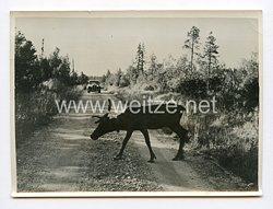 III. Reich Pressefoto. Finnland: Das Land der kommenden Olympischen Spiele 1940.