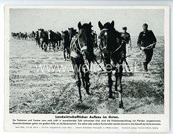 """III. Reich - gedrucktes Pressefoto """" Landwirtschaftlicher Aufbau im Osten """" 18.5.1943"""