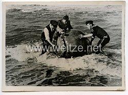 Kriegsmarine Pressefoto, Feine