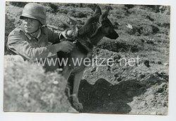 Wehrmacht Heer Pressefoto: Der Soldat und seine Meldehunde
