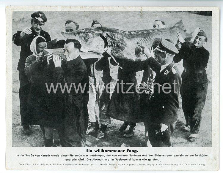 """III. Reich - gedrucktes Pressefoto """" Ein willkommener Fang """" 3.9.1943"""